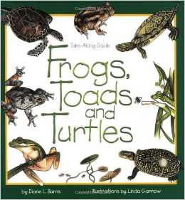 frogs toads and turtles