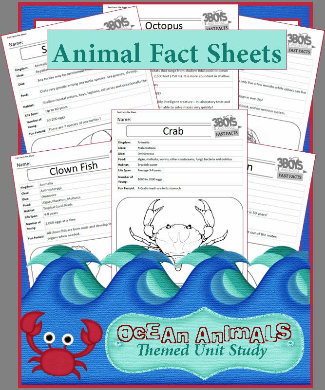 ocean animals fact sheets