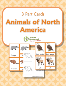 Animals-of-North-America
