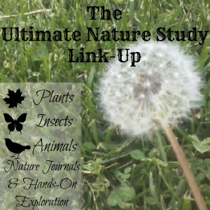 The-Ultimate-Nature-Study-Link-Up