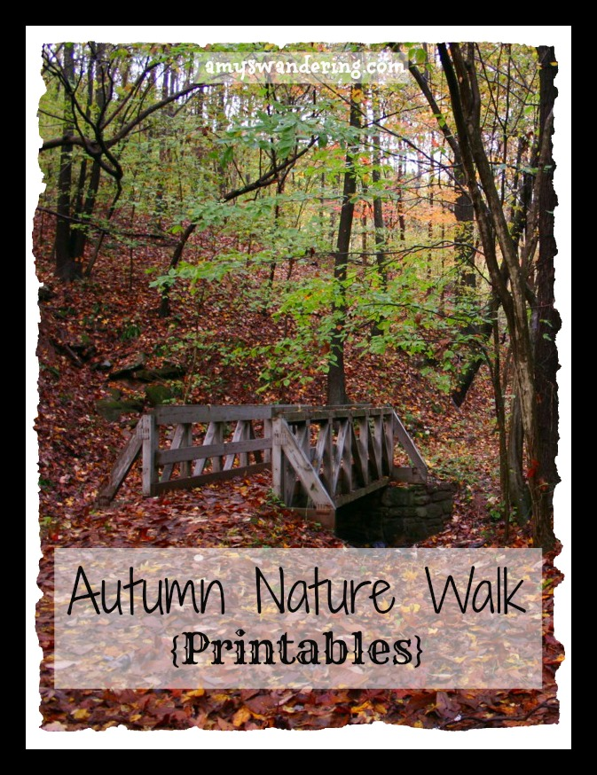 Autumn Nature Walks