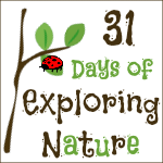 31 Days Exploring Nature 150