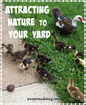 Attracting Nature to Your Yard