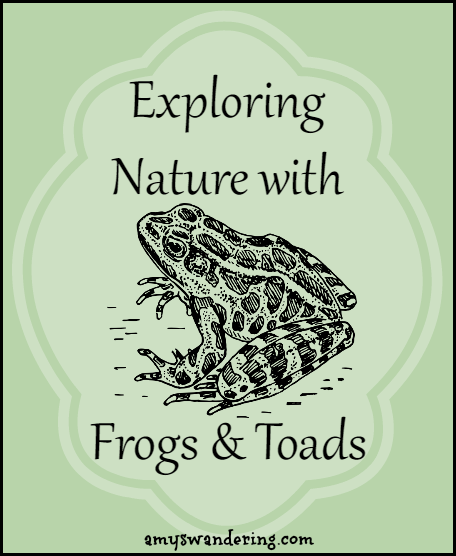 Exploring Nature with Frogs & Toads - printables, unit studies, & eBooks