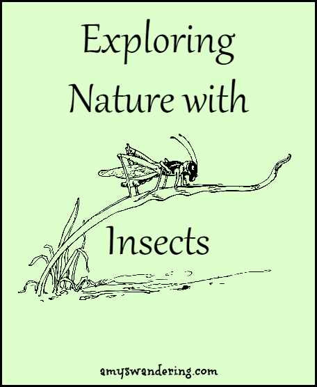 Exploring Nature with Insects - printables, unit studies & eBooks