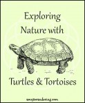 Exploring Nature with Turtles & Tortoises