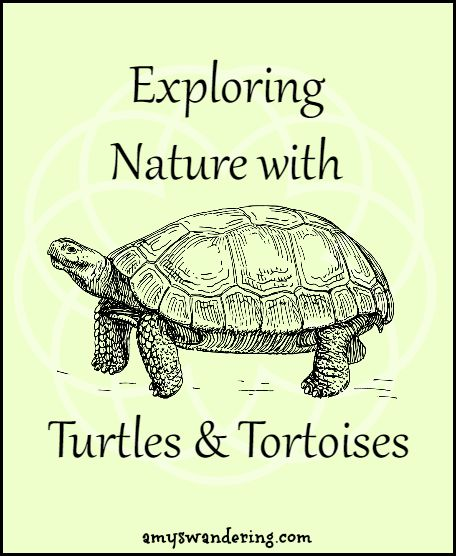 Exploring Nature with Turtles & Tortoises - printables, unit studies, & eBooks