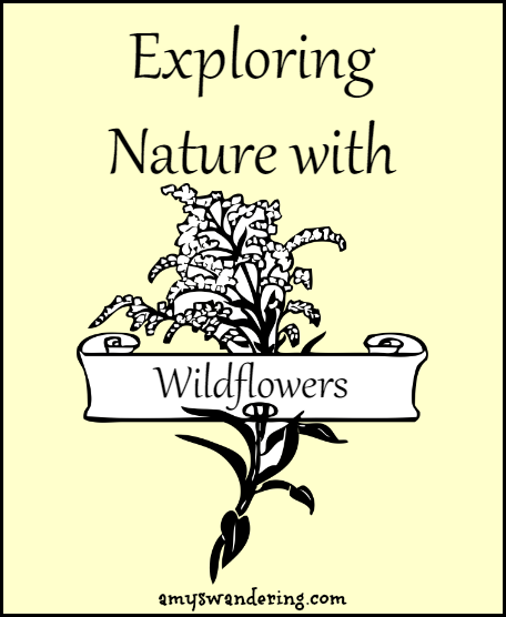 Exploring Nature with Wildflowers - printables, unit studies & eBooks