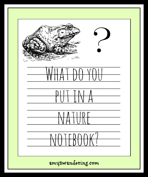What Do You Put in a Nature Notebook? Ideas and links to free nature notebooking pages
