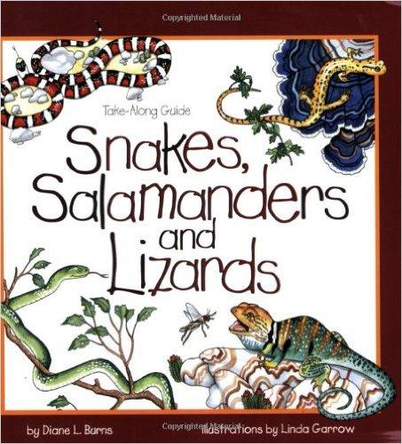 snakes, salamander, lizards