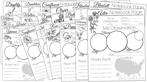 wildflower notebooking