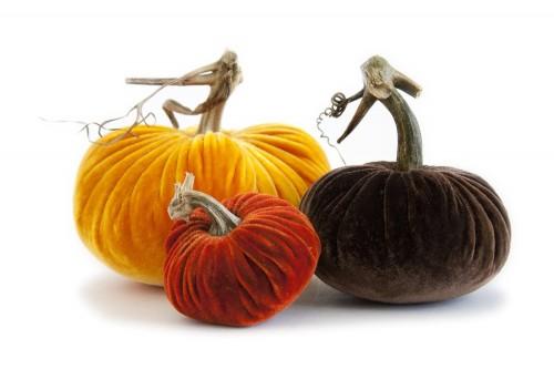 harvest velvet pumpkins