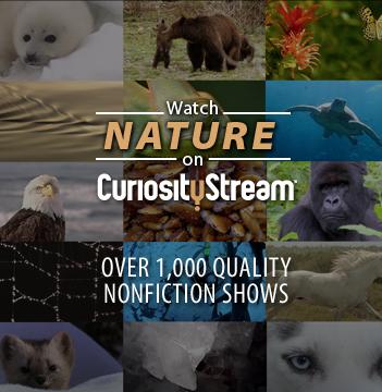 Nature on CuriosityStream
